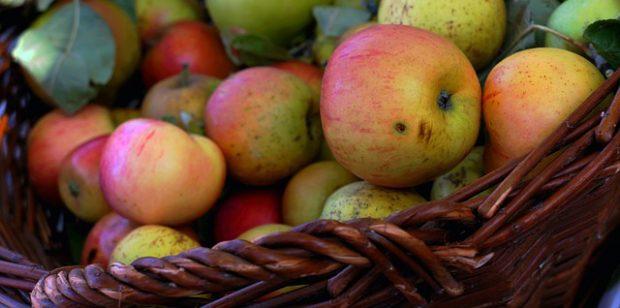 Apfelsaftpressen im Tierpark Niederfischbach täglich von 10 – 18 Uhr