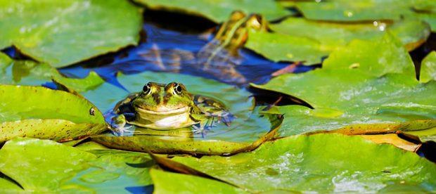 Amphibien und Amphibienschutz