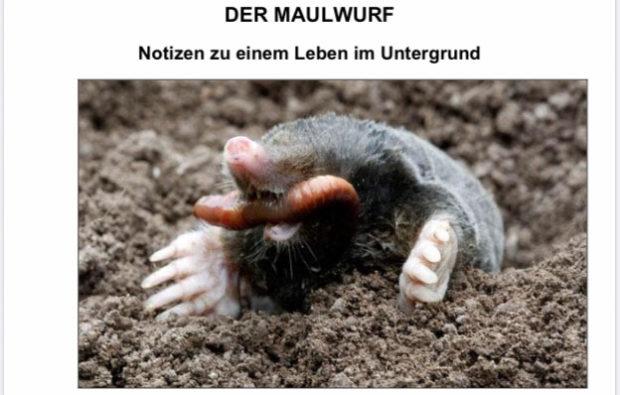 """Neuer """"Wörner"""" online"""