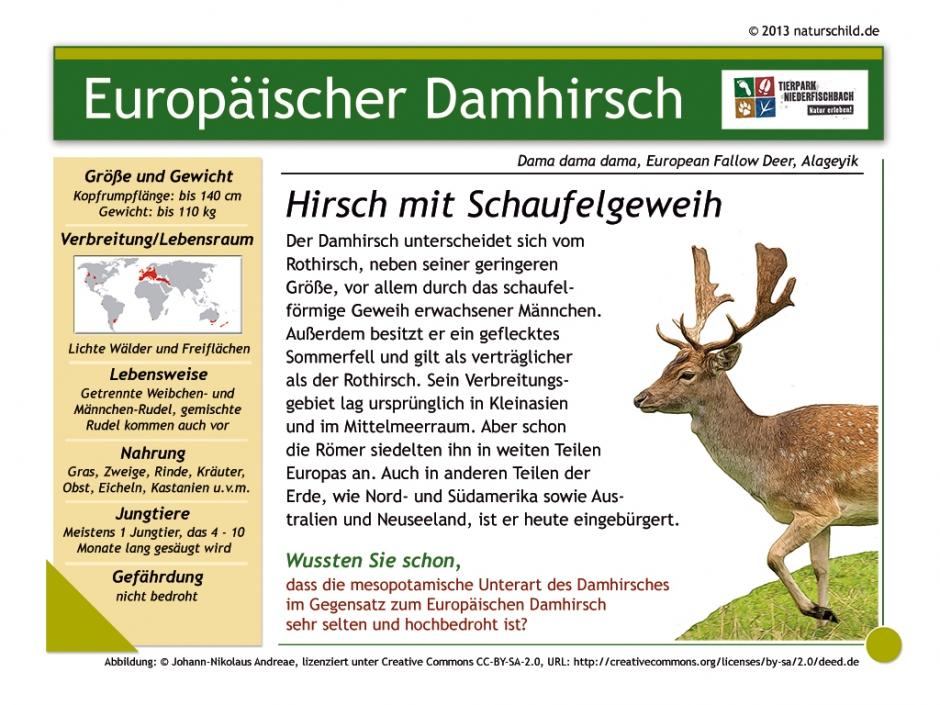 Europäischer Damhirsch