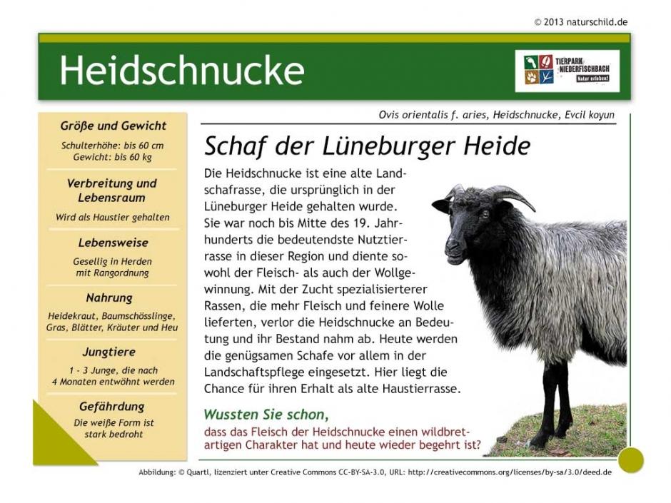 Heidschnucke