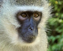 Help Save The Monkeys