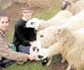 Praktikanten im Tierpark immer willkommen