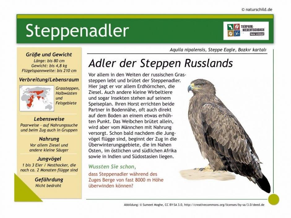 Steppenadler