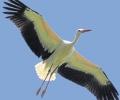 Hier ein Bericht von der Rhein-Zeitung über unseren Zugvogeltag