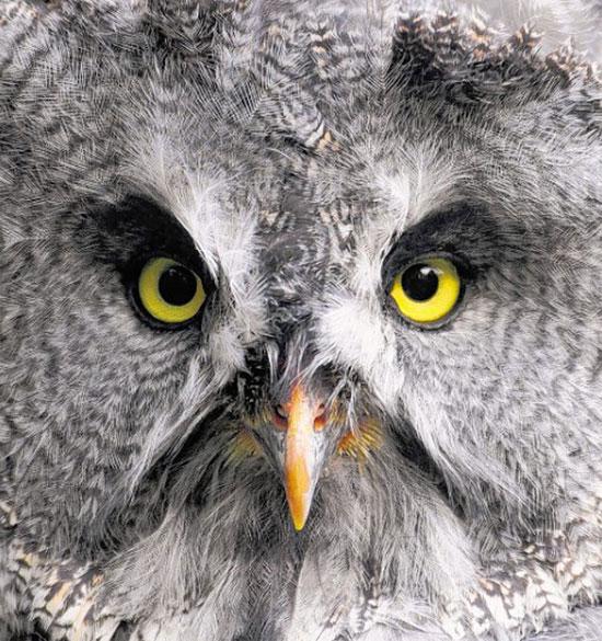 Ein Falkner für den Tierpark